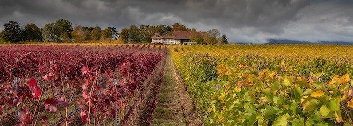 Piedmont & Burgundy Comparison