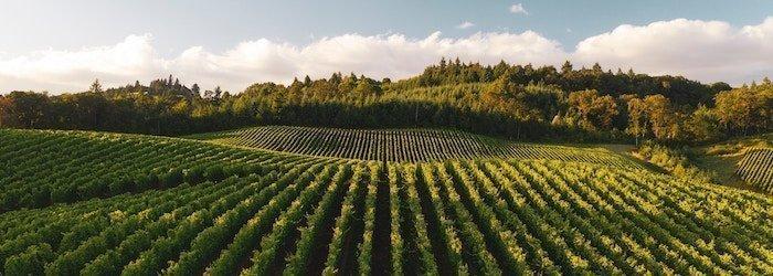 Piedmont & Burgundy soils