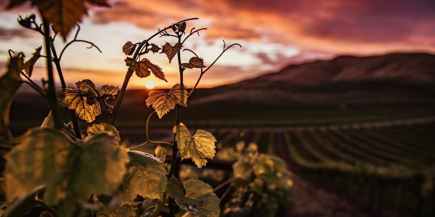 Piedmont & Burgundy
