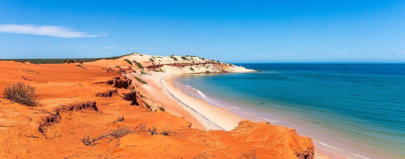 The Vine, The Aussie & The Kiwi