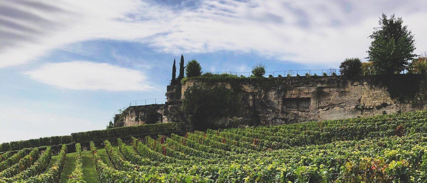 The Vine & The Land